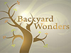 backyard wonders
