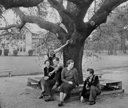Students under Friendship Oak