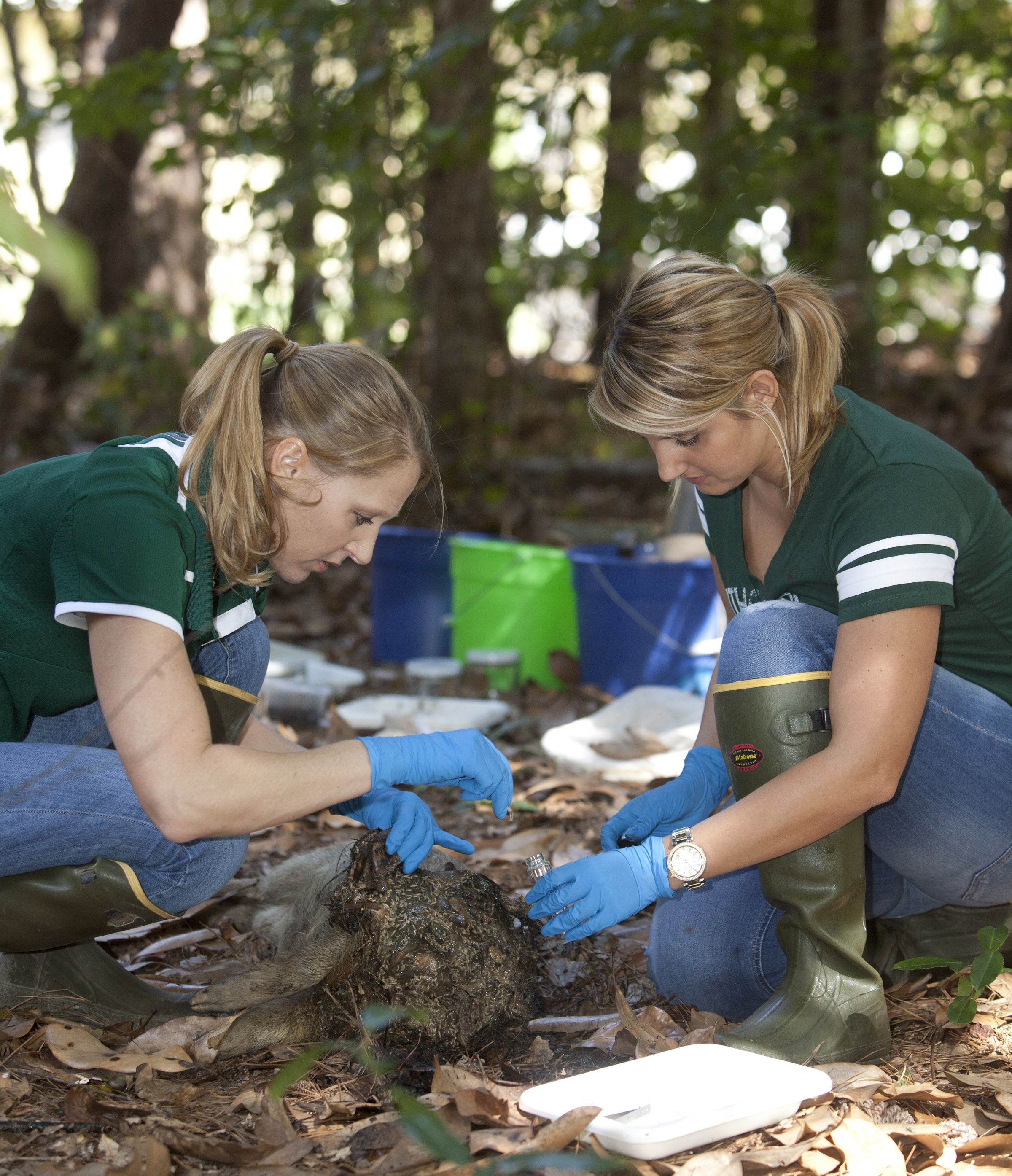 Southeastern S Science On Tap Lecture To Focus On Forensic Entomology