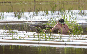 St. Tammany Parish partners with Southeastern, Comite resources to test experimental floating marshland